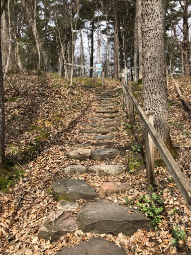 Nature's staircases are one of my favorite things about hiking.